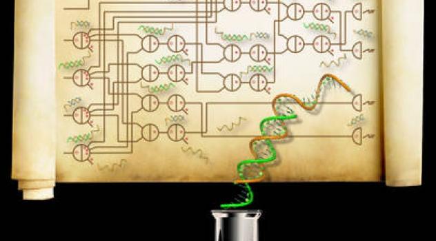 Il DNA per calcolare la radice quadrata di un numero